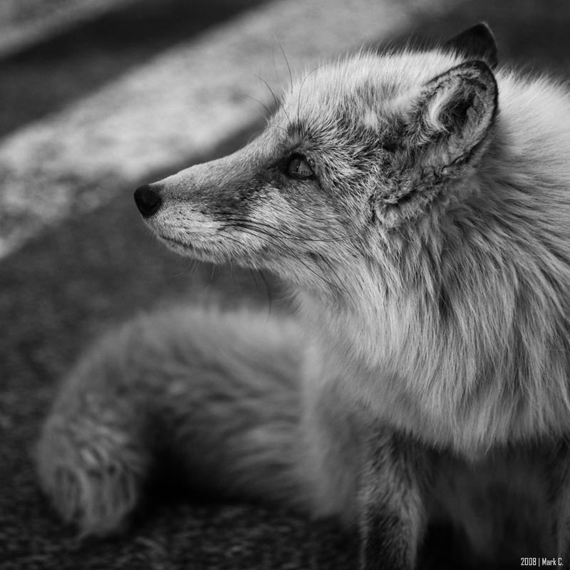 foxy by markeatworld