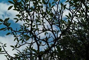 Sky, Blue Sky by markeatworld