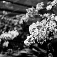 bunch of orchids by markeatworld