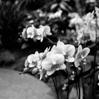 Some more orchids by markeatworld