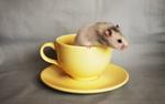 Pepper in a Mug
