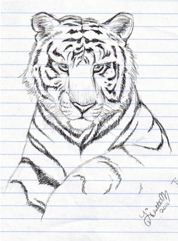 Realistic Tiger Sketch By Lisette-M On DeviantArt