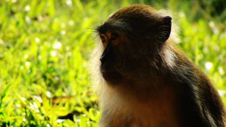 monkey face side by zhose