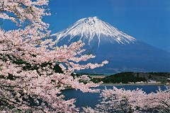 Mouth Fuji with Cherry Tree by Dreams-of-Skies