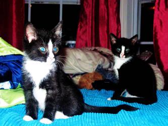 Kittens by CheyLovesU