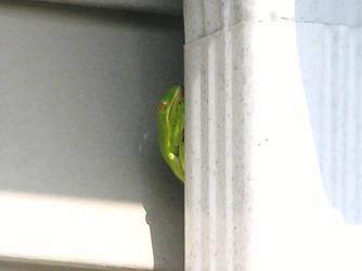 Treefrog :o by CheyLovesU