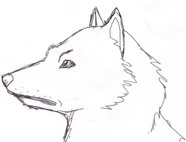 Wolf side view drawing - photo#38
