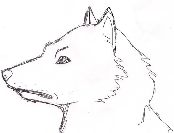 sideways wolf how to draw