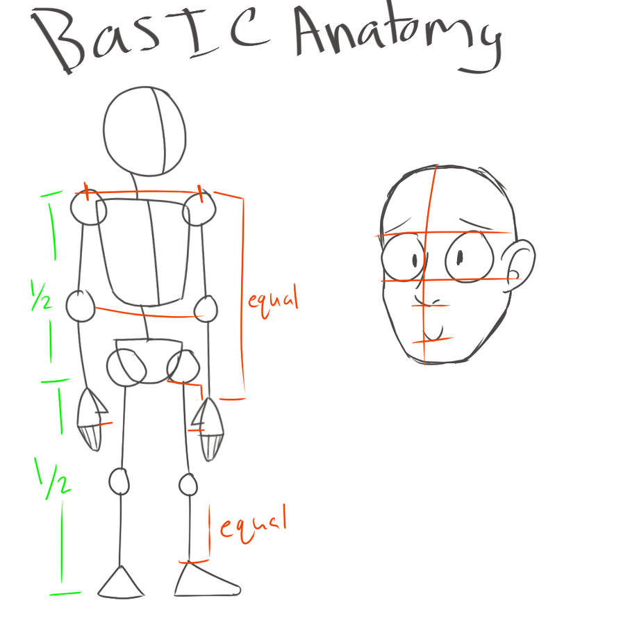 Basic anatomy tips by PixelDemons on DeviantArt