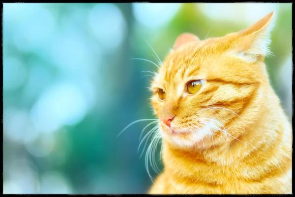 http://fc05.deviantart.net/fs44/i/2009/087/b/8/Orange_Tabby__Orange_Eyes_by_simzcom.jpg
