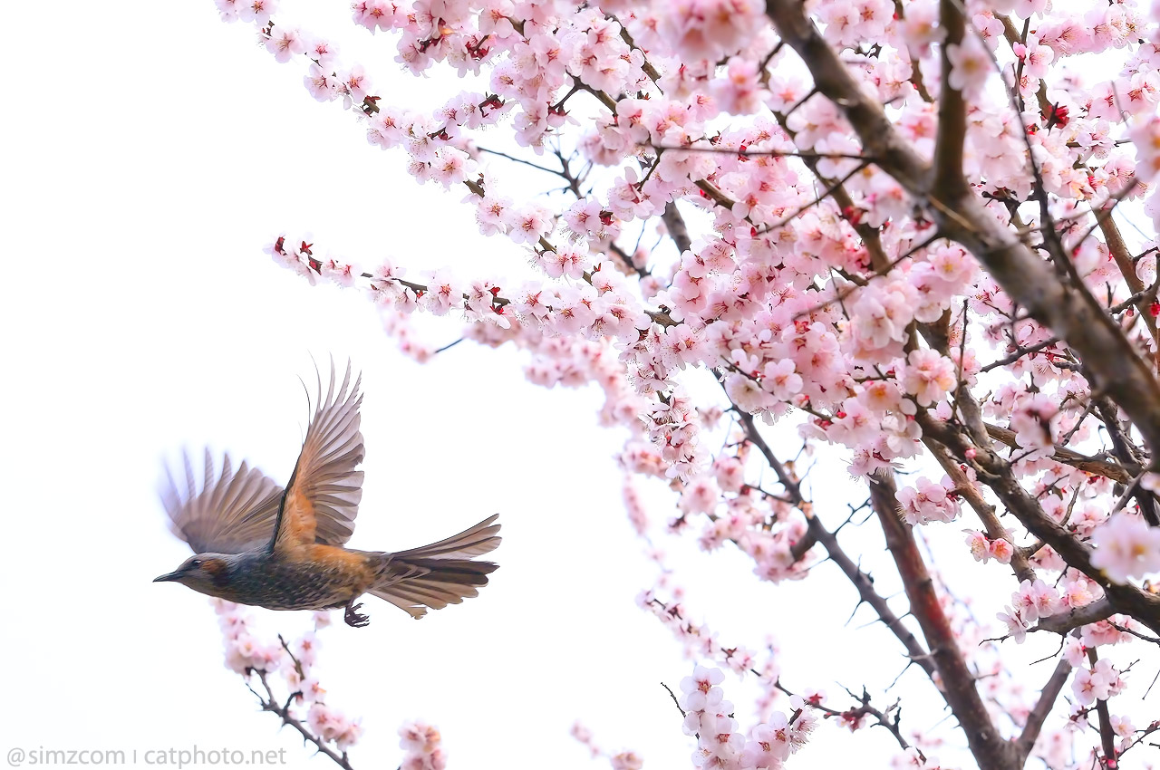 Fly from Spring to Spring