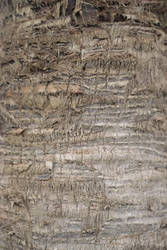 Wood Texture Stock 9 by SSyn-Stock