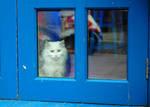 Cat's Blues