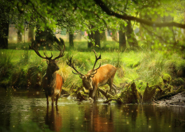 Two Deer by DJMadameNoir