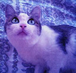 Strange cat
