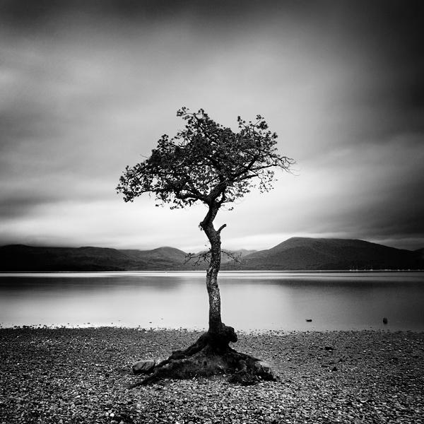 Milarrochy Tree by sensorfleck