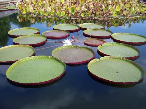 Pond Stock2