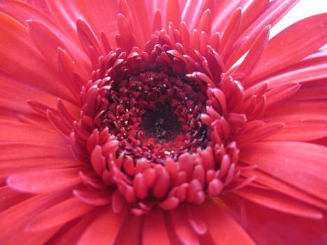 Red Flower Stock 2