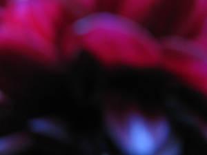 Flower Texture 5