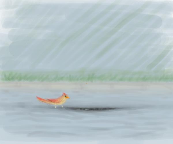Bird by KelpGull