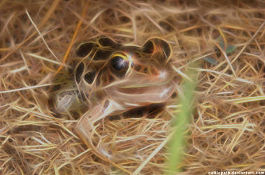 Frog by celticpath