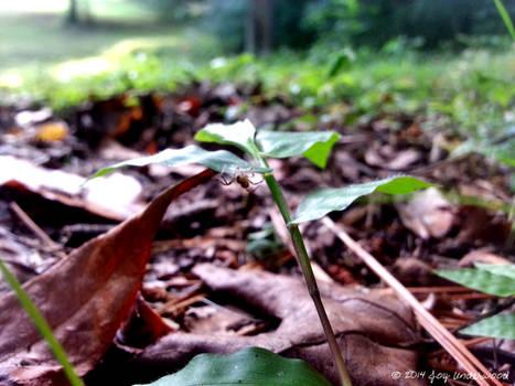 Spider on a leaf