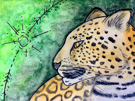 aceo leopard
