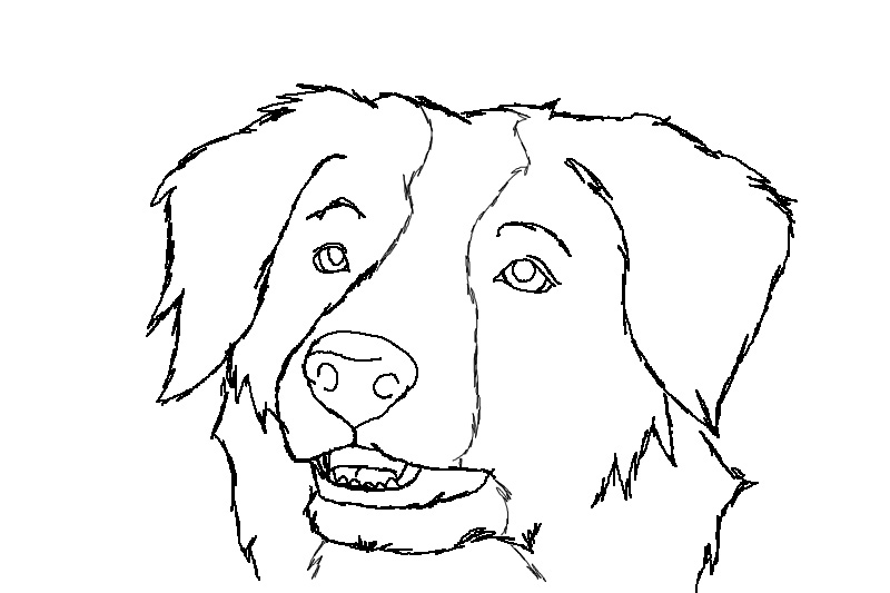 border collie free lineart by luchinfakes