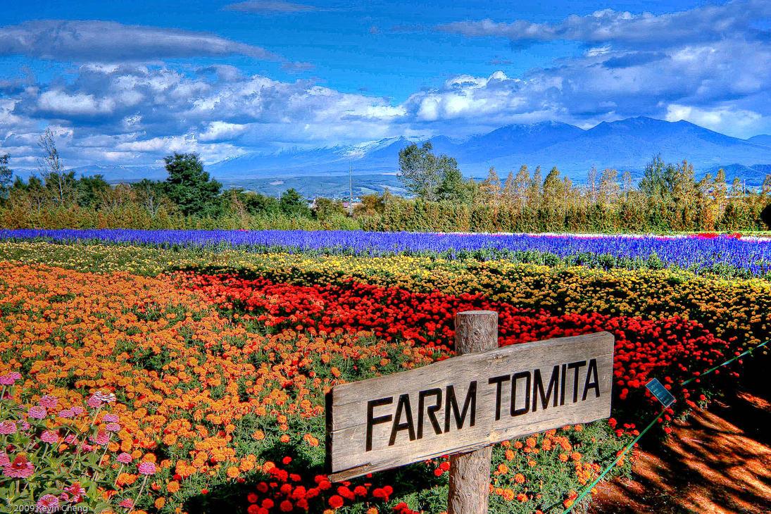 ผลการค้นหารูปภาพสำหรับ Farm Tomita