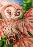 Barn Owl by Linda-98