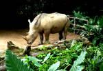 Wild Times - Rhinoceros