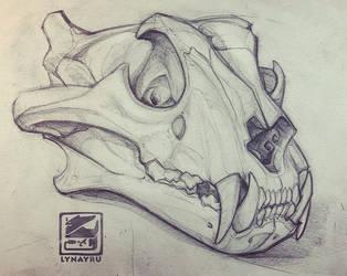 Skull Sketch by Lynayru