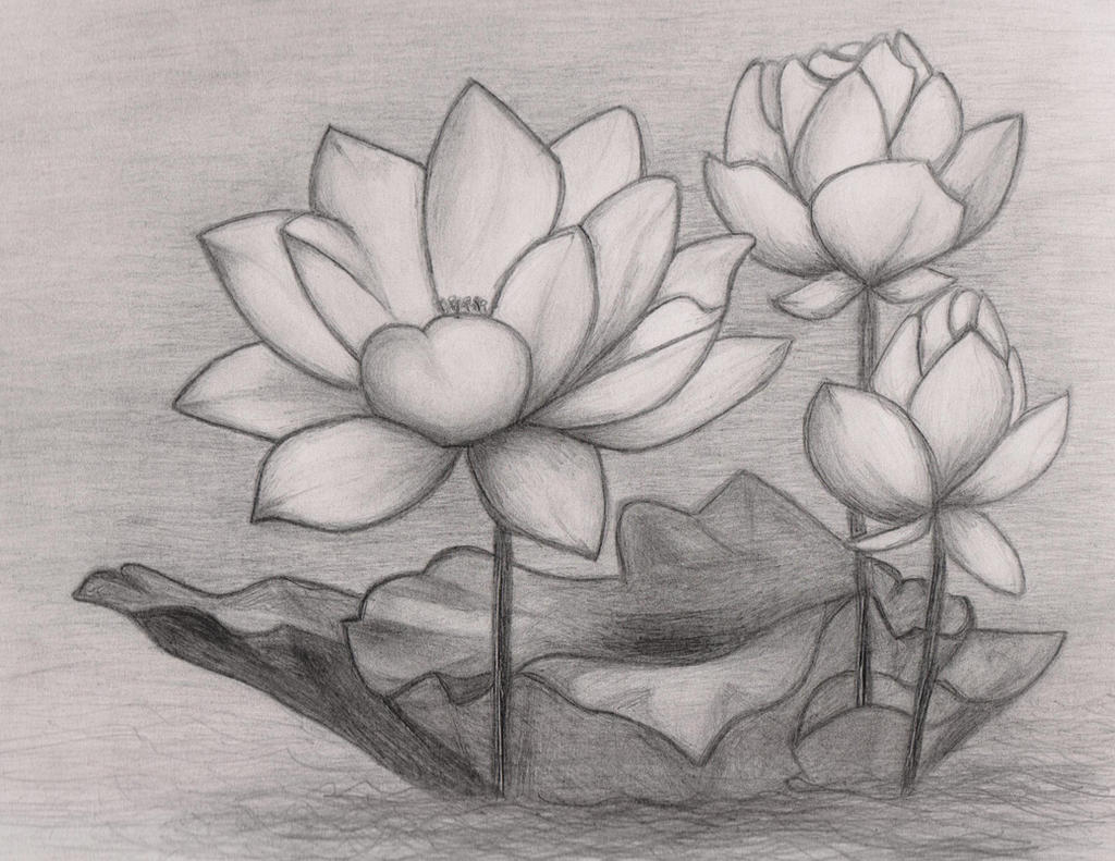 Lotus Flower by xskiesrbluex on DeviantArt