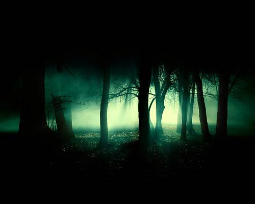 Forbidden Forest