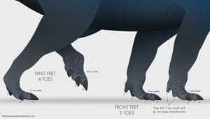 Ceratopsid Feet