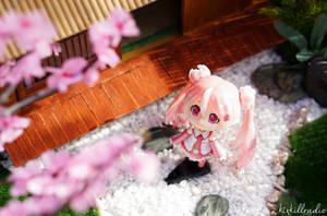 Cherry Blossoms by kixkillradio