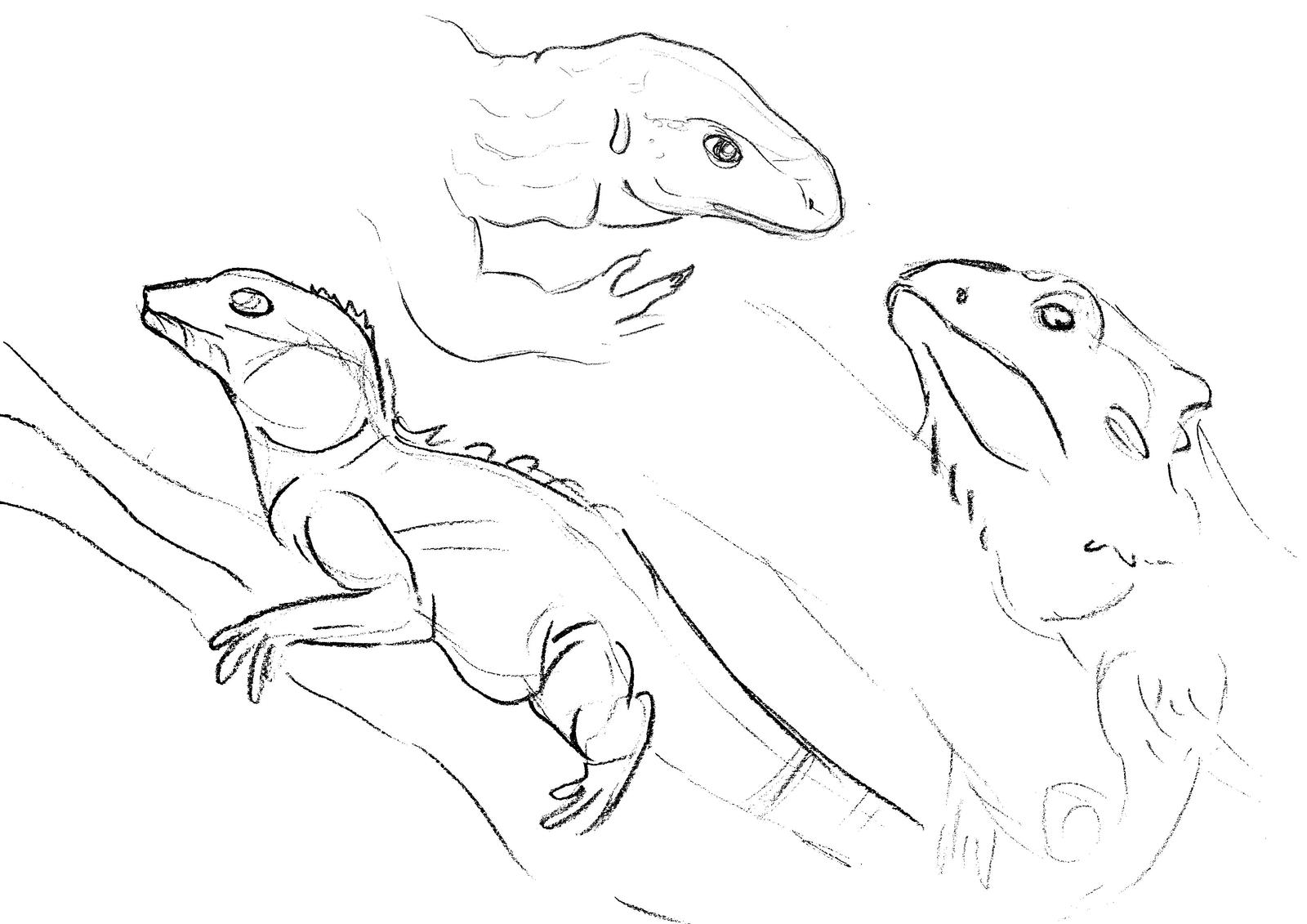 Line Drawing Lizard : Lizard sketch by adele waldrom on deviantart
