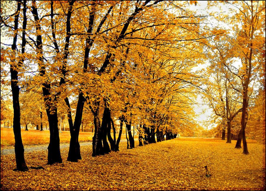 Polish autumn... by Pharaun333