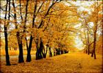 Polish autumn...