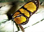 A butterfly in the night by Deviant-Brazilian-FC