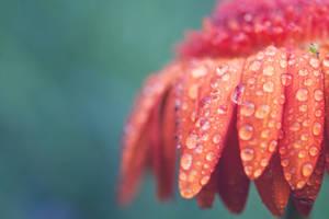 Let the rain come by purpleface