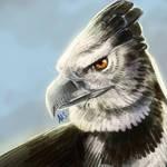 30. Harpy Eagle