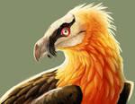 242. Bearded Vulture