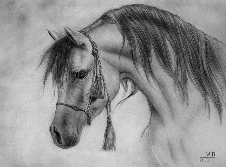 Arabian Stallion by RoyallyCrimson