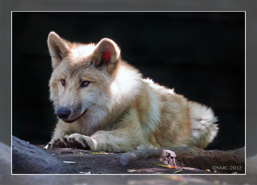 Teen Wolf by RoyallyCrimson