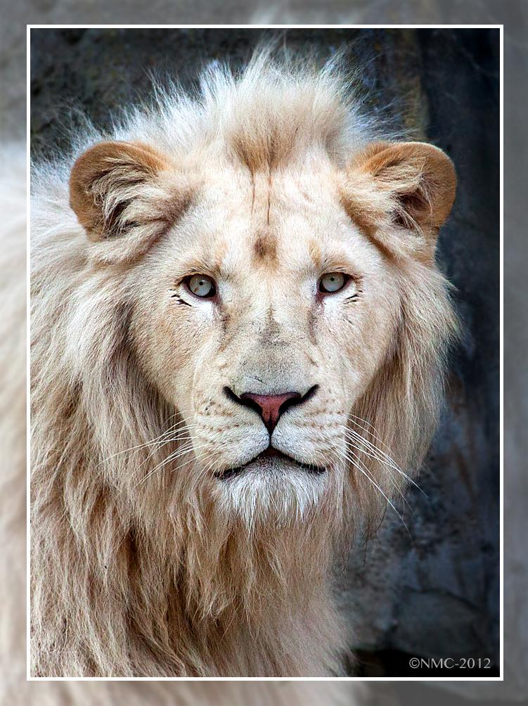 White King by RoyallyCrimson
