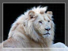 Credo - The White Lion by RoyallyCrimson