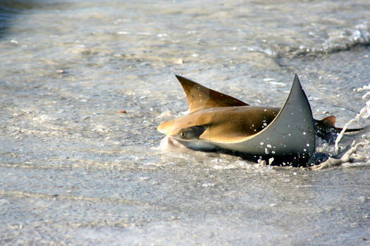 Sting Ray ultimate shot