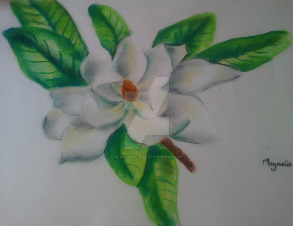 Magnolia flower by DEANJENO--art