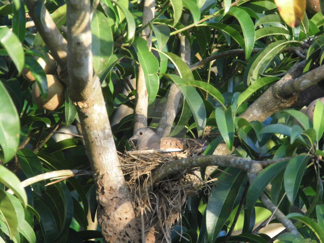 Nesting Dove by DEANJENO--art